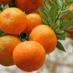 http://italienskvinogmad.dk/wp-content/uploads/2016/07/Clementiner-150x150.jpg